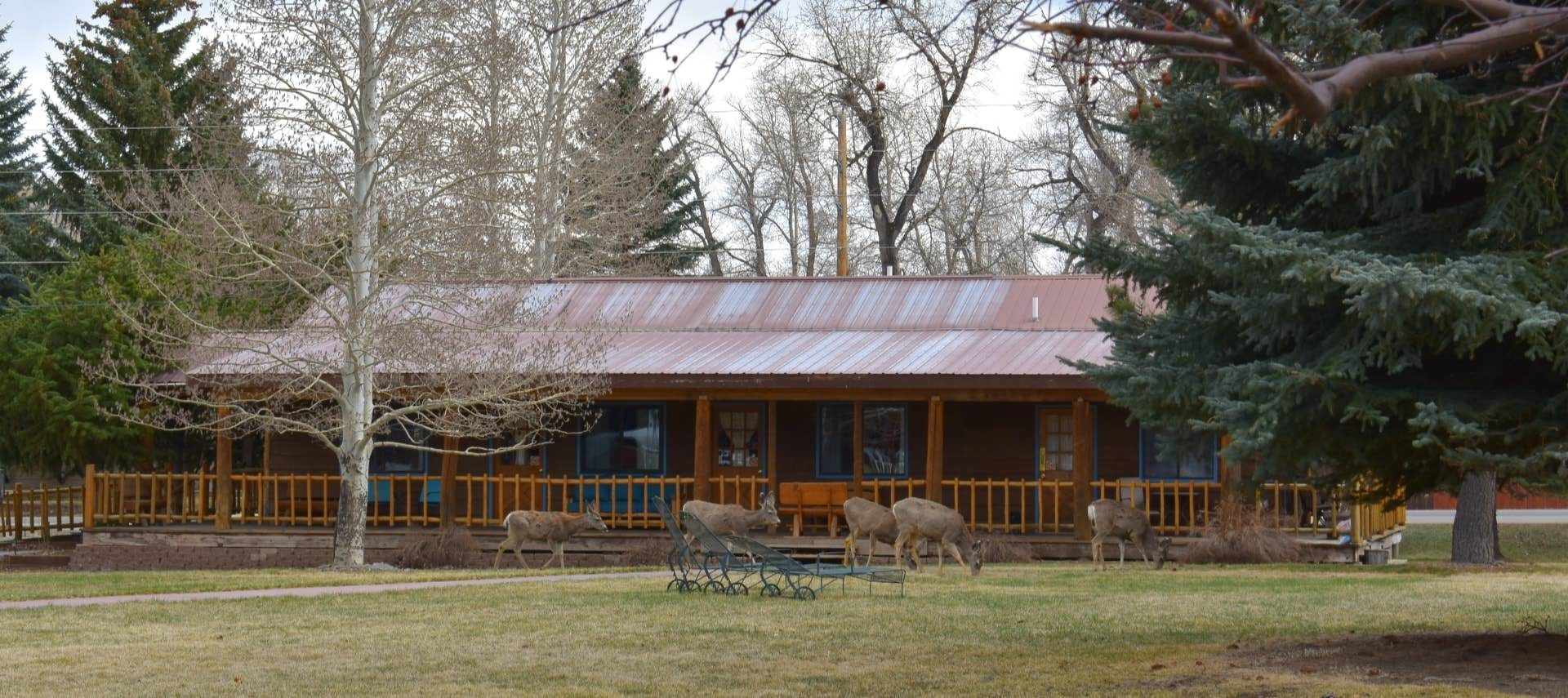 Large wooden lodge with blue painted trim surrounded by large pine trees and multiple deer grazing in the green lawn