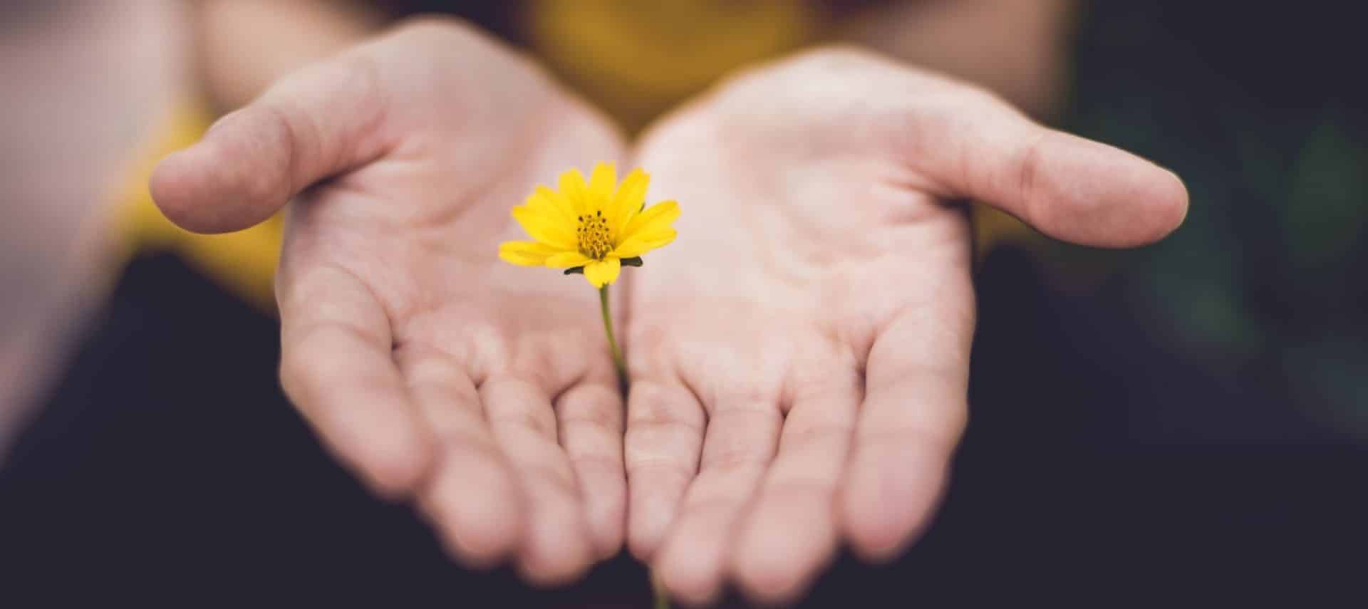Close up view of yellow flower in a person's hands