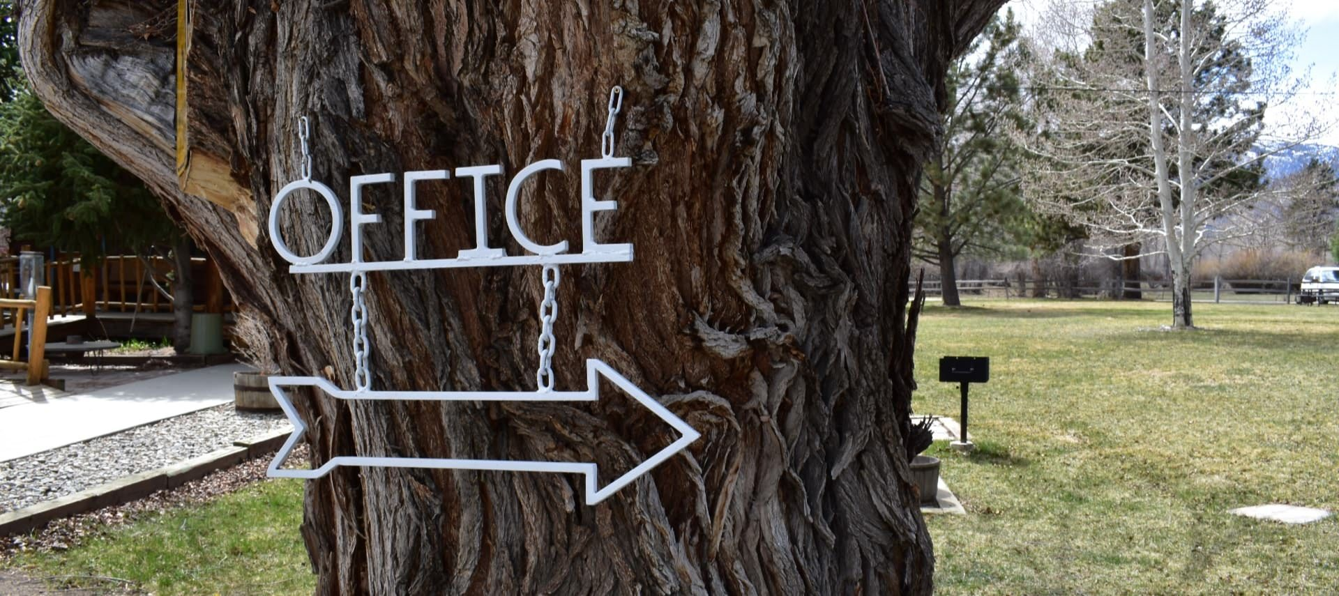 Close up view of a large tree with a white sign with an arrow to the office